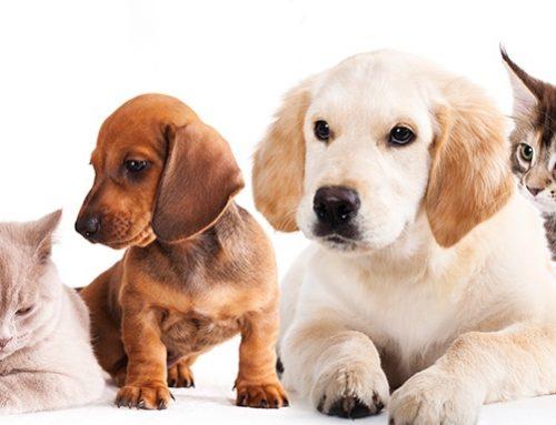 Que animal é mais indicado pra você?