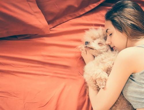 Por que você não deve dormir com seu pet?