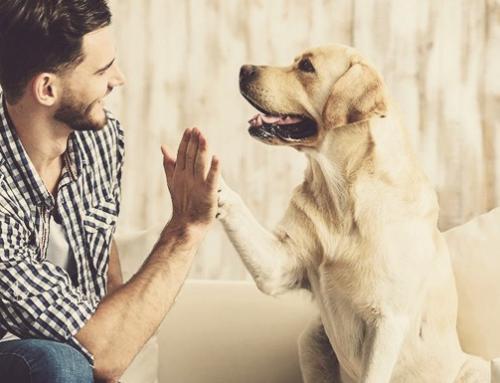 Quais são as raças de cães preferidas dos brasileiros?