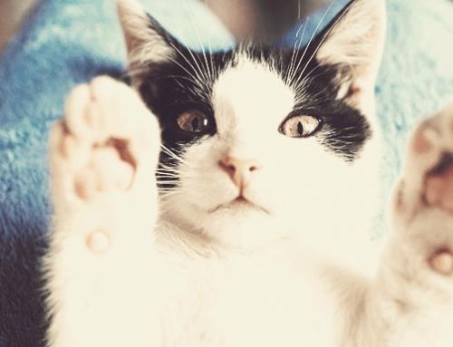 3 brinquedos para gatos super fáceis de fazer