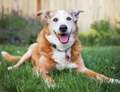 Seu PET tem a doença de insuficiência renal? Descubra!