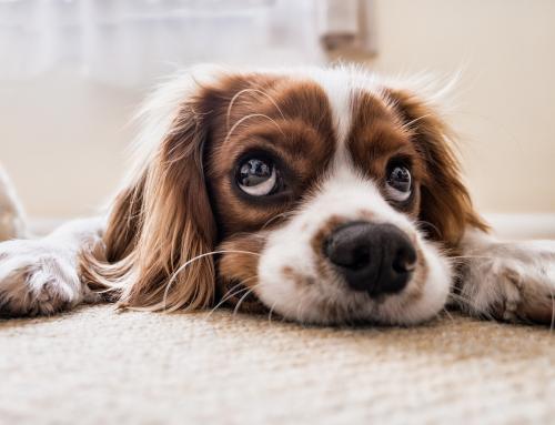 Sinais que podem demonstrar que seu cachorro está doente