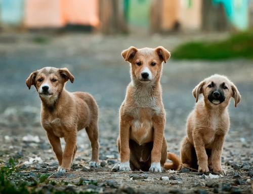 Instituições que cuidam de pets: como ajudar?