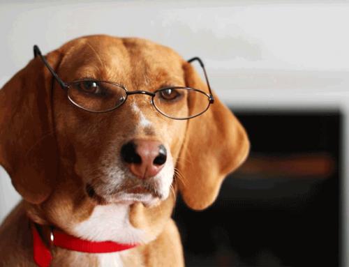 Redobrando a atenção com os pets idosos