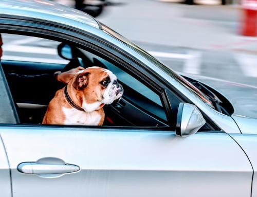 Cuidados importantes para quem vai viajar com o Pet