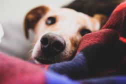 Saiba como ajudar seu animal de estimação a passar o inverno bem quentinho!