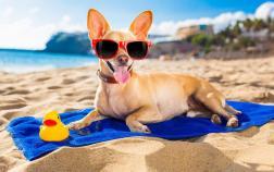 Pet em praias brasileiras: é permitido?